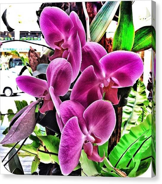 Orchids Canvas Print - #orchid #flower #bloom #instamood by Remy Asmara