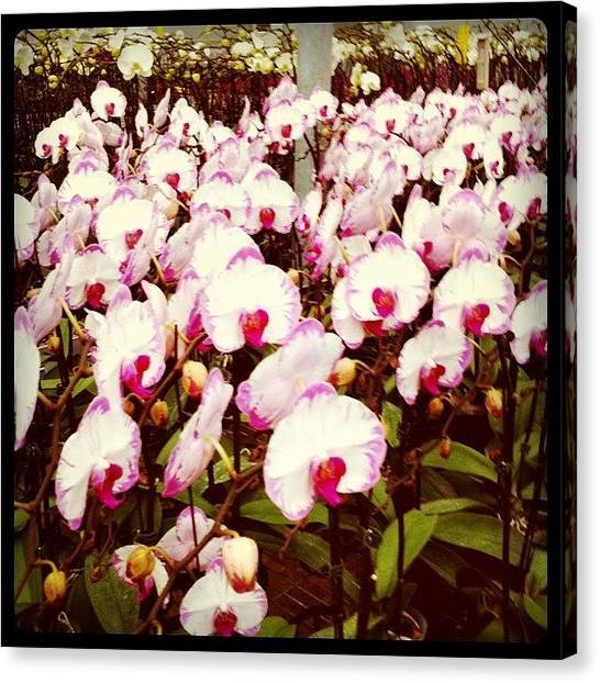 Orchids Canvas Print - Orchid In Bloom. #brunei #brunika by Aliya Zin
