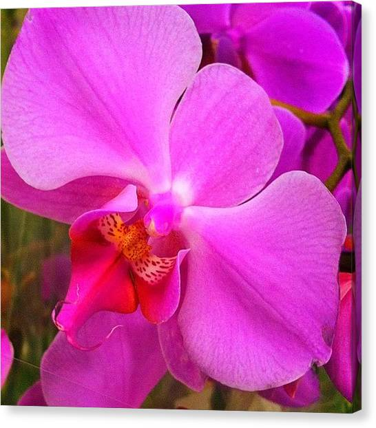 Orchids Canvas Print - #orchid #iphoneography #iphonesia by Sherri Galvan