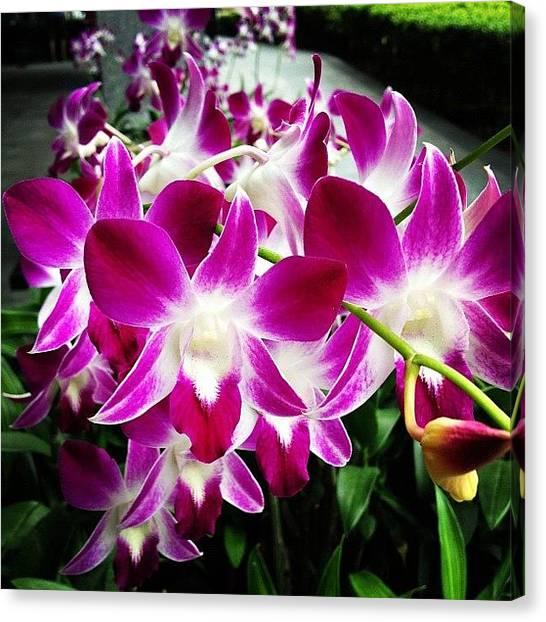 Orchids Canvas Print - Orchid Oh Orchid... #orchid #flower by Ck Chai