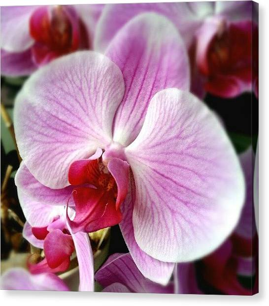 Orchids Canvas Print - Orchid #orchids #flowers #instagramhub by Kelly Love