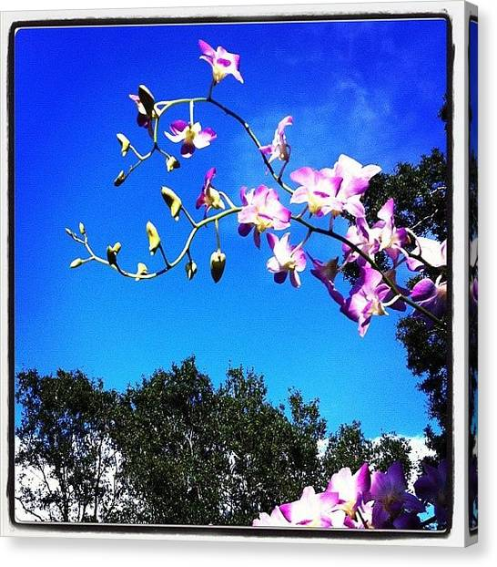 Baby Canvas Print - #orchid #orchids #sky #orchidsinthesky by Amber Baby