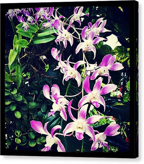 Orchids Canvas Print - #orchid #orchidshow #orchids #flower by Tania Torres