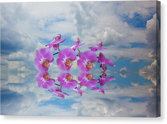 Orchid Sky Canvas Print