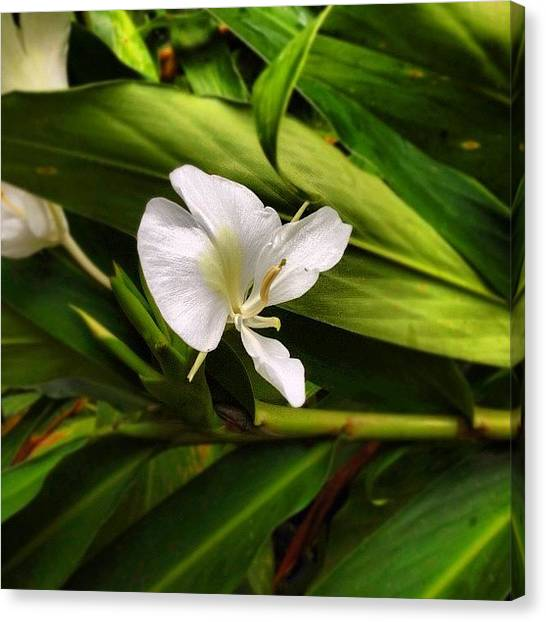Rainforests Canvas Print - Orchid by Summer Cloud