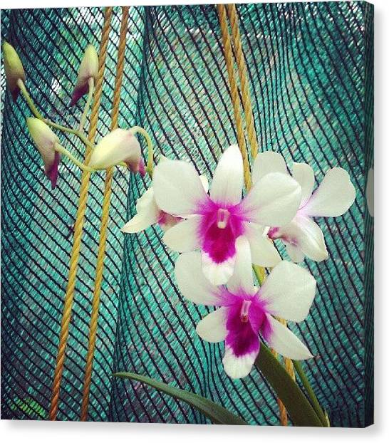 Orchids Canvas Print - Orchids by Aron Muralidhar