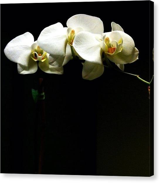 Orchids Canvas Print - #orchids #flower #garden #pretty by Amanda Max
