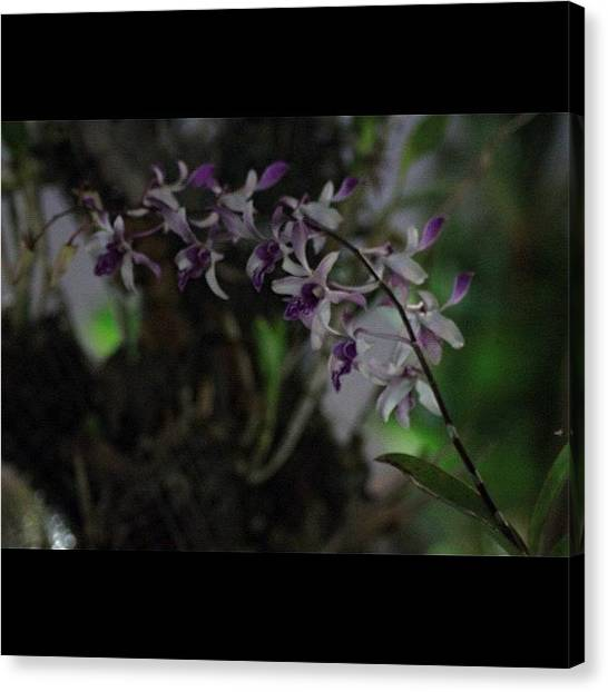 Political Canvas Print - Orchids Of Beauty And Mystery, By My by Ahmed Oujan