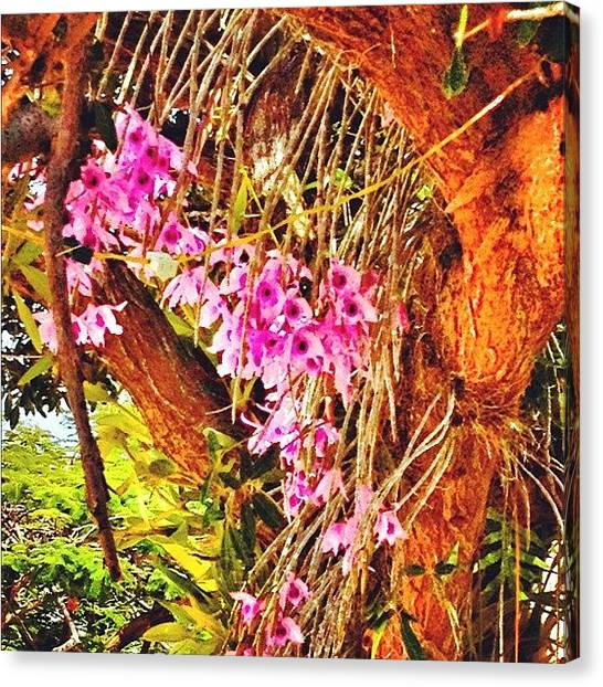 Orchids Canvas Print - #orchids #tree #nature by Ivelaida Rivera