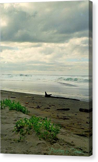 Oregon Coast 17 Canvas Print