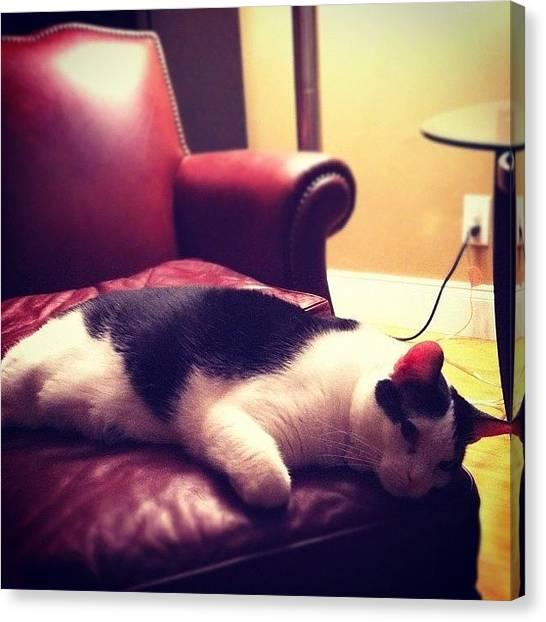 Tuxedo Canvas Print - Oreo Says Good Morning #blackcat by Steven Griffin