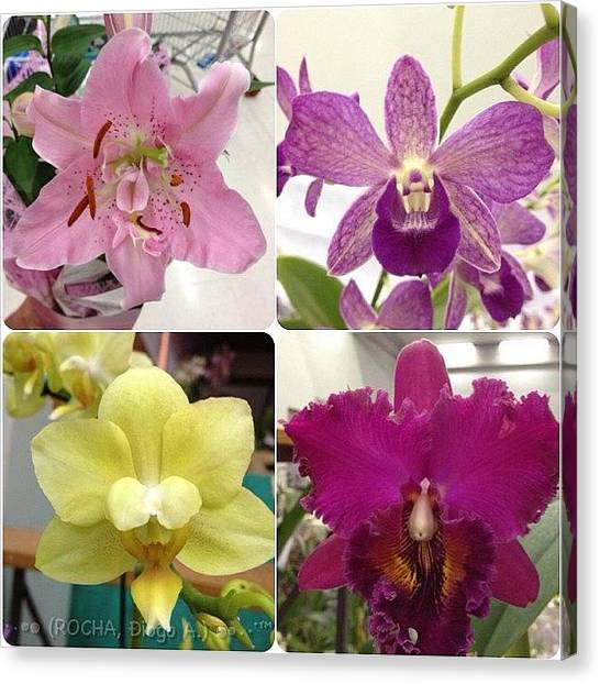 Orchids Canvas Print - #orquideas #orchid by Diogo Rocha