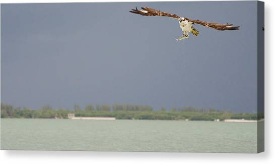 Osprey With Catch Canvas Print by Mike Rivera