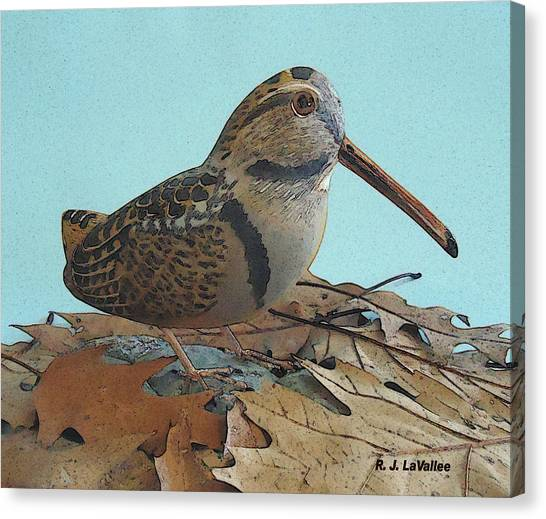 Our American Woodcock Canvas Print