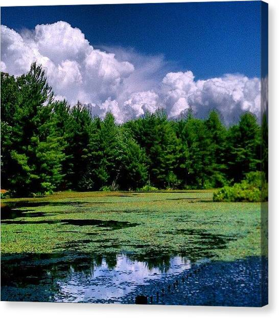 Landscape_lover Canvas Print - Out In The Woods by Dan Piraino