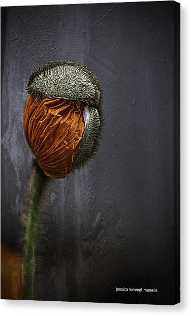 Out Of Darkness Grows Flowers Canvas Print by Jessica Manelis