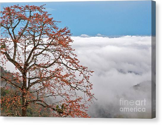 Out Of The Clouds Canvas Print
