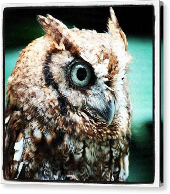 Owls Canvas Print - #owls by E  Marrero