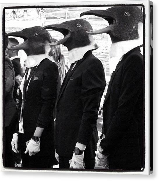 Penguins Canvas Print - P Ed Up From The Feet Up by Erik Jorgensen