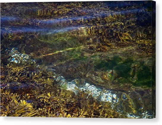 Pacific Calm 3 Canvas Print by David Kleinsasser