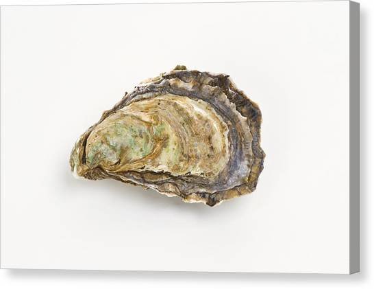 Pacific Oyster Canvas Print by David Nunuk