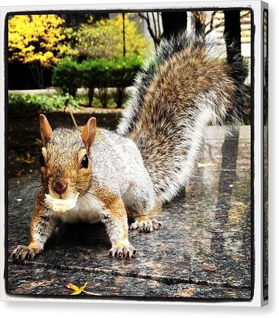 Squirrels Canvas Print - Pain Au Chocolat Hunter, Montreal by Kateryna Mysak