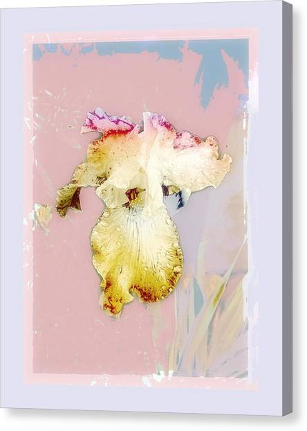 Painted Iris Canvas Print