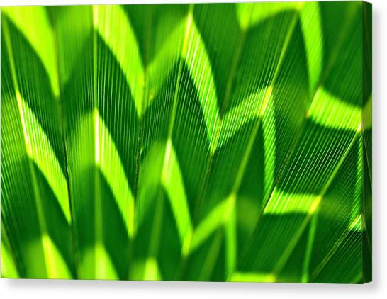 Palm Abstract Canvas Print
