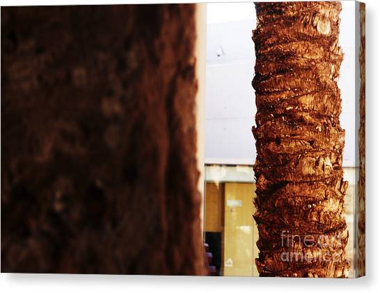 Palm And Wall Canvas Print