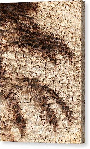 Palm Fragment Canvas Print