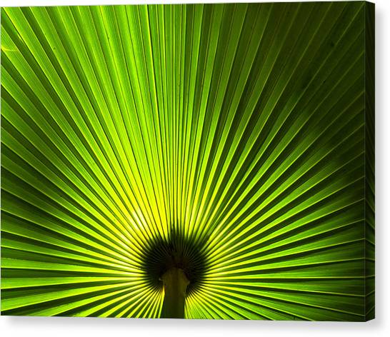 Palm Leaf Canvas Print