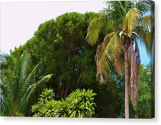palm tree Key west Canvas Print by Josee Dube