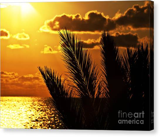 Palm Tree Silhouette At Sunset On The Beach Canvas Print by Anna Om