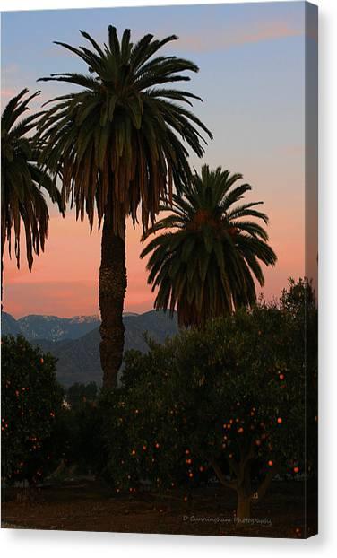Palm Trees And Orange Trees Canvas Print