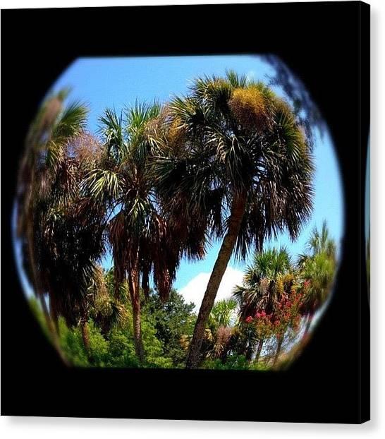 Bases Canvas Print - Palm Trees #georgia #ga #palmtrees by Ashley Balconis