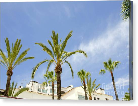 Palm Trees In The Blue Canvas Print by Perry Van Munster