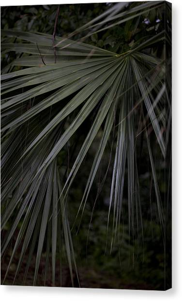 Palms Canvas Print by Christina Durity