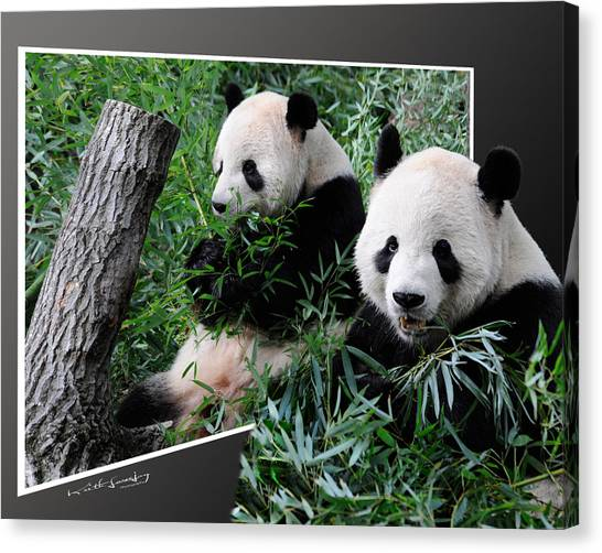 Panda Out Of Frame Canvas Print