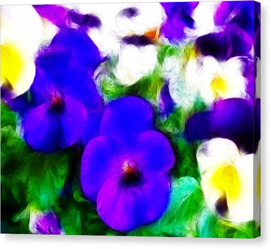 Pansies Canvas Print by Sharon Lisa Clarke