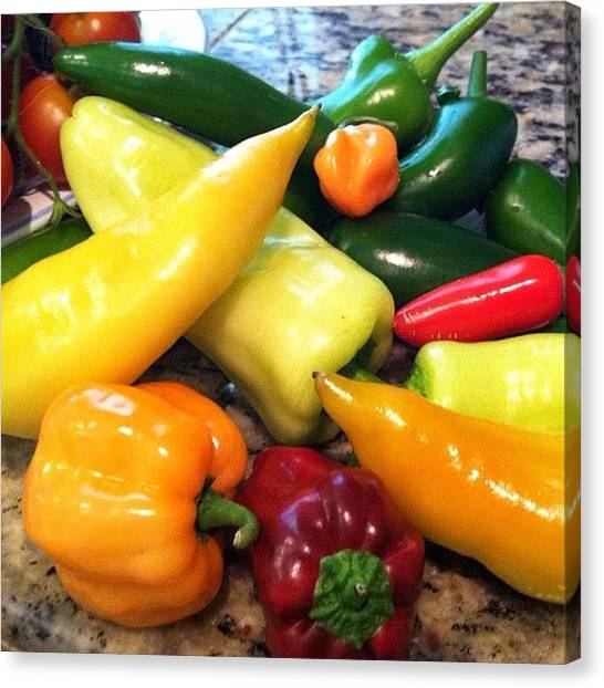 Pepper Canvas Print - Papa's Peppers.... Just Some Of by Vicki Damato