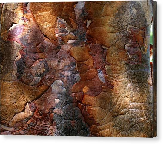 Paperbark Maple Canvas Print by Vaughan Fleming