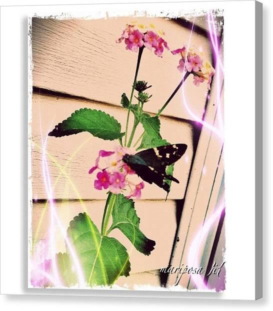 Flying Canvas Print - Papillon by Mari Posa