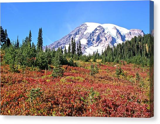 Paradise In Fall On Mt. Rainier  Canvas Print