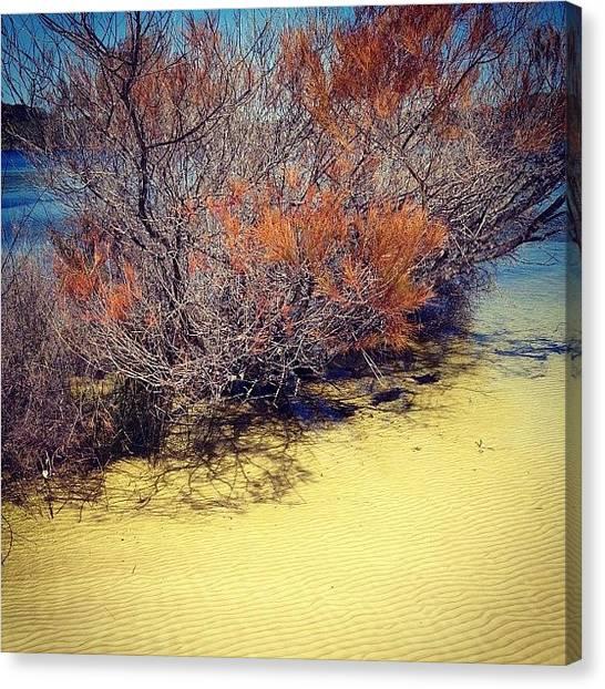 Offroading Canvas Print - #paradise #seeaustralia #tourism by Tony Keim