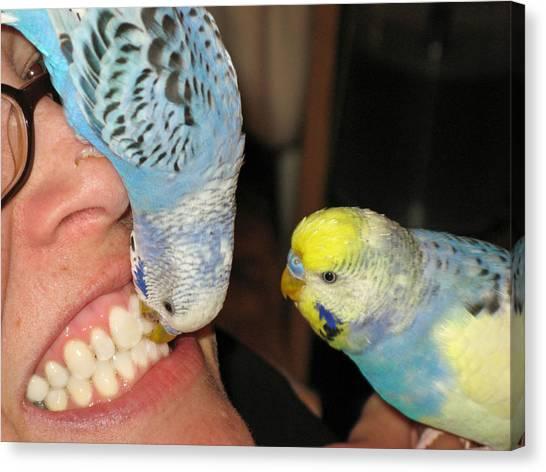 Parakeet Dentists Canvas Print