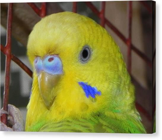 Parakeet Inside Cage Canvas Print by Arindam Raha