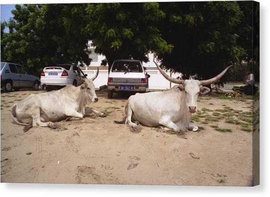 Parking Attendants Dakar Senegal Canvas Print by Wayne King