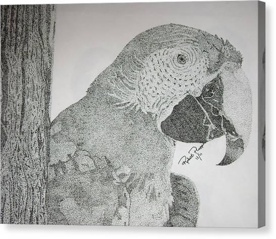 Parrot Canvas Print by Robert Plopper