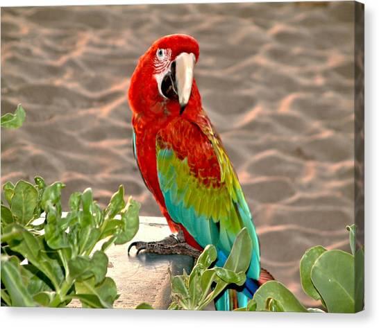 Parrot Sunning On The Beach Canvas Print