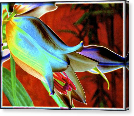 Party Lily Closd Canvas Print